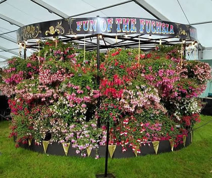 fuchsia carousel at Chatsworth Flower Show